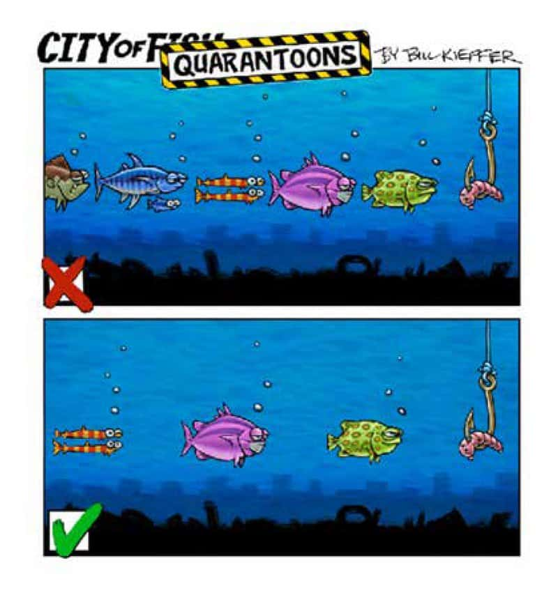 City of Fish: Quarantoons by Bill Kieffer